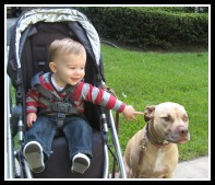 "My friend Riley, the Staffordshire Terrier with his ""brother"" Mason"